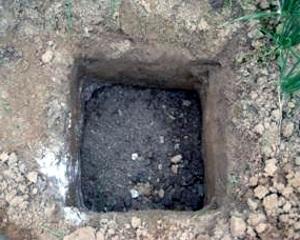 Hố trồng tiêu có kích thước 40 x 40 x 40cm hoặc 60 x 60 x 60cm