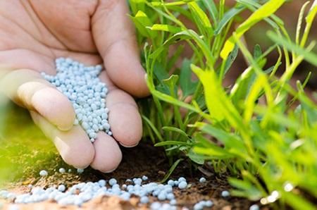 Cách điều chỉnh pH của đất